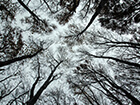 looking-up-at-trees-from-below