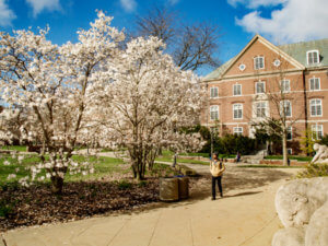 student walks by trees in blossom and two limestone sculptures by Lorado Taft on the south side of Foellinger Auditorium