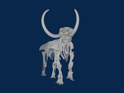 screenshot of 3D visual of mastodon skeleton